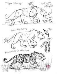 Pin Drawn Tigres Anatomy 4