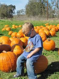 Livermore Pumpkin Patch Farm by Joan U0027s Farm U0026 Pumpkin Patch