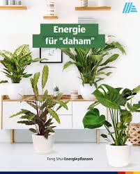 hofer österreich so lassen wir uns gerne pflanzen