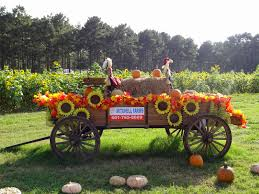 Pumpkin Patch Collins Ms by The Roaming Brain October 2014
