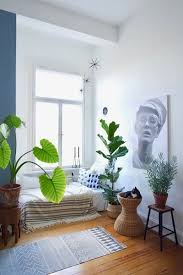die besten pflegeleichten zimmerpflanzen indoor pflanzen