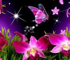 Animated Butterfly Wallpaper For Mobile Cute Phone Hd