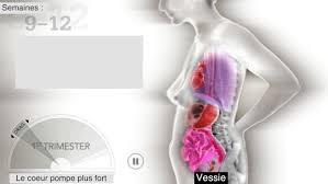 interieur corps humain femme cette animation révèle ce qui arrive aux organes d une femme au