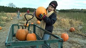 Southern Ohio Pumpkin Patches by Best Pumpkin Patches In Minnesota Wcco Cbs Minnesota