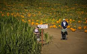 Best Pumpkin Patch Near Roseville Ca by Find Perfect Pumpkin At Sacramento Area Patches The Sacramento Bee