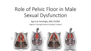 Male Pelvic Floor Relaxation Exercises by Role Of Pelvic Floor In Male Sexual Dysfunction