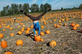 Canby Pumpkin Patch by 50 Fall Activities For Children In Portland Or
