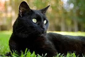 Pumpkin For Pets Diarrhea by Home Remedies For Cat Diarrhea Cat World