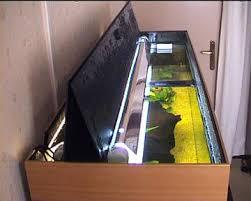 choisir aquarium