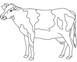 Cow Coloring Page For Kids