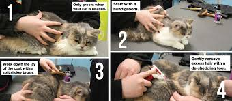 Excessive Hair Shedding In Cats by Your Cat How To Groom A Shorthaired Cat Your Cat