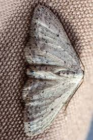 Moths in the Closet 7 Tips for Getting Rid of Them