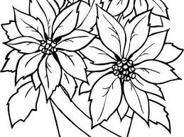 Poinsettia Flower Coloring Pages Download And Print