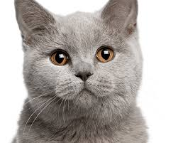 cat cat products save money by shopping with us pet drugs