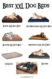 Extra Large Orthopedic Dog Bed by Top 25 Best Xxl Dog Beds Ideas On Pinterest Crochet Cat Beds