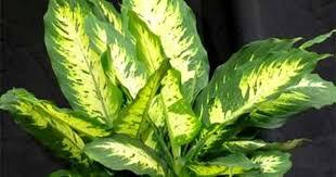 plantes vertes d interieur plante d interieur facile d entretien photos de conception de