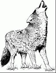 Terrific Wolves Coloring Pages With Wolf And Realistic