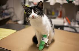 signs of worms in cats common cat diseases aspca