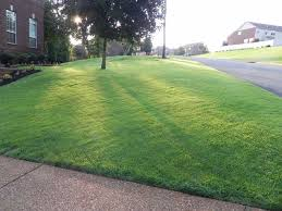 Carpet Grass Florida by How To Grow Zoysia Grass From Seed Zoysias Com