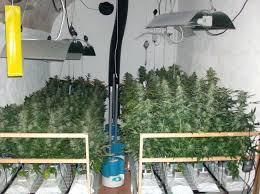 chambre de culture cannabis complete armoire de culture clean kit 692 bestanime me