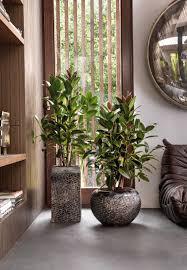 wrinkle bronze pflanzkübel luxe lite universe