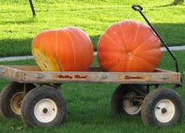 Kohala Pumpkin Patch Hours by 51 Best Pumpkin Farms Images On Pinterest Farms Baby Ideas And