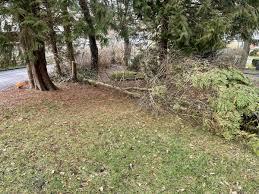 pol kb bad wildungen unbekannter beschädigt bäume auf