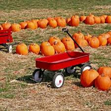 Pumpkin Patch Near Bay Area by Tampa Bay Pumpkin Patches 2016 Tampa Homebody