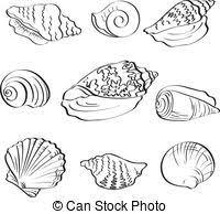 Set seashells outline Set different marine seashells