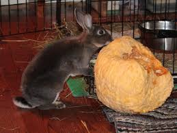 Can Rabbits Eat Pumpkin Seeds by Dispatches From Can Of Duck