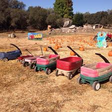 Best Pumpkin Patch Near Roseville Ca by Folsom Edh Ca Vote For Us Rickey Ranch Pumpkin Patch