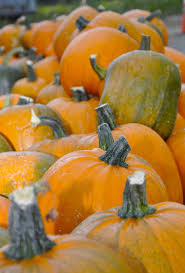 Pumpkin Patch North Austin Tx by 136 Best Pumpkin Patch Images On Pinterest Autumn Fall Autumn