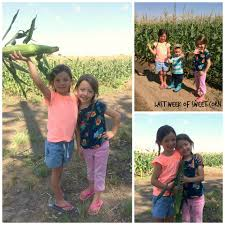 Pumpkin Patch Ogden Utah by Mcfarland Family Farms Home Facebook
