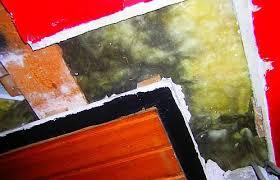 schimmelbefall schwarzschimmel trotz dämmung gaaanz