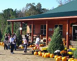 Pumpkin Patches In Arkansas by Motley U0027s Pumpkin Patch And Christmas Trees Little Rock Arkansas