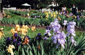 Wordless Wednesday 5 Iris Gardens in Upper Montclair Part 1