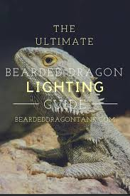Bearded Dragon Heat Lamp Times by The Ultimate Bearded Dragon Lighting Guide Bearded Dragon Tank