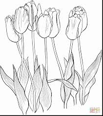 Astonishing Click The Seven Tulips Coloring Page To View Printable Version With Tulip Pages And