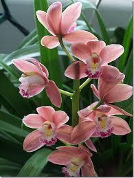 découvrir les pots et mélanges parfaits pour les orchidées ça n