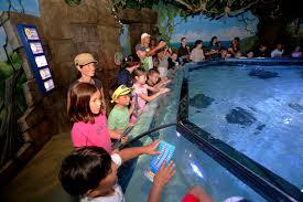 sea aquarium san diego 1000 aquarium ideas