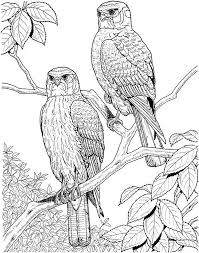 Adult Coloring Pages Bird