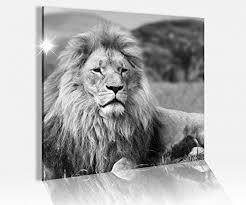acrylglasbild 50x50cm schwarz weiss löwe mähne afrika tier
