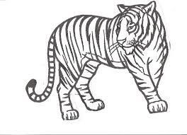 Tiger Coloring Pages 13