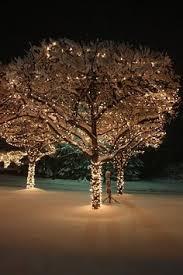 Twinkling Christmas Tree Lights Canada by Bonsai White Snow Tomorrow Small Form Vietnam Trees Of Life