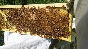 Top 10 Things About Beekeeping To Consider | Award-Winning Local ... Hive Time Products A Bee Adventure For Everyone Bkeeping Everything You Need To Know Start Your First Best 25 Raising Bees Ideas On Pinterest Honey Bee Keeping The Bees In Your Backyard Guide North Americas Joseph Starting Housing And Feeding Top Bar Beehive Projects Events Level1techs Forums 562 Best Images Knees 320 Like Girl 10 Mistakes New Bkeepers Make Splitting Hives Increase Cookeville Bkeepers Nucleus Colony Or How A 8 Steps With Pictures