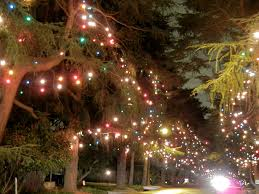 Bethlehem Lights Christmas Trees by Christmas Tree Lane Pasadena Christmas Ideas