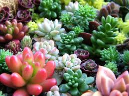 Best Plants For Bathroom Feng Shui by 188 Best Succlents Images On Pinterest Air Plants Gardening And