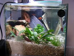 quels poissons pour un bac de 50 à 60 litres aquariophilie org