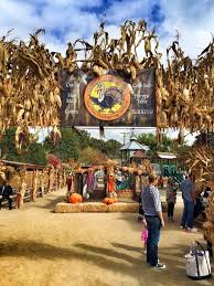 Pasadena Pumpkin Patch Groupon by Gobble Wobble Days At Zoomars Petting Zoo Oc Mom Blog