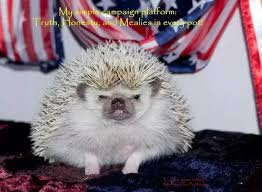 Ceramic Heat Lamp For Hedgehog by Are Hedgehogs Good Pets Pets Quora